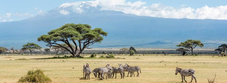 Kenya Visa Application Requirements Residents Of Germany Visahq